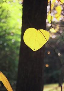 web-arbre au caramel crédit C.Vermillard Arboretum  national des Barres